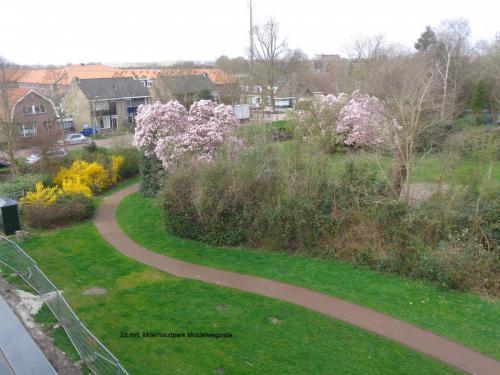 25 maart 2019: Moerhoutpark Middelweg-zijde